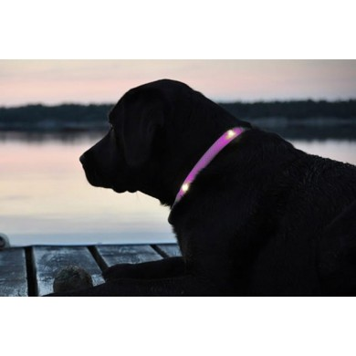 LED adjustable collar for dogs and cats different colors and sizes | Rosa - XL